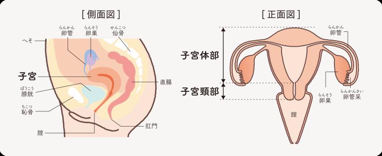 が 自覚 ん 症状 子 宮頸 【宫颈糜烂】宫颈糜烂有什么症状、用什么药最好、影响怀孕吗、怎么治疗_亲子百科_太平洋亲子网